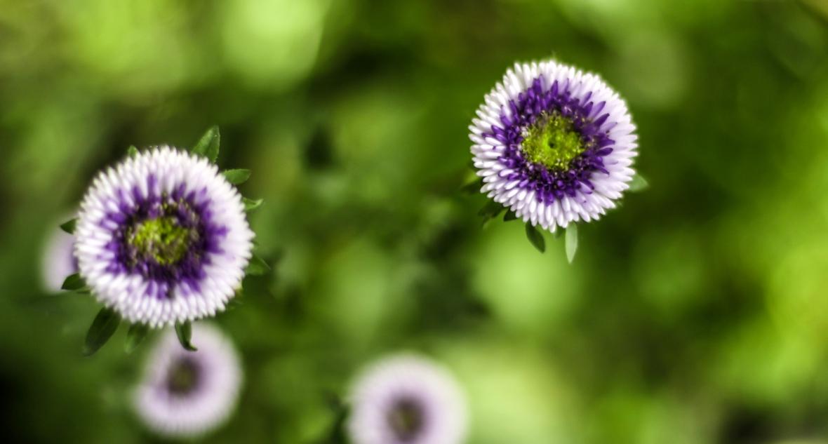 flower_y